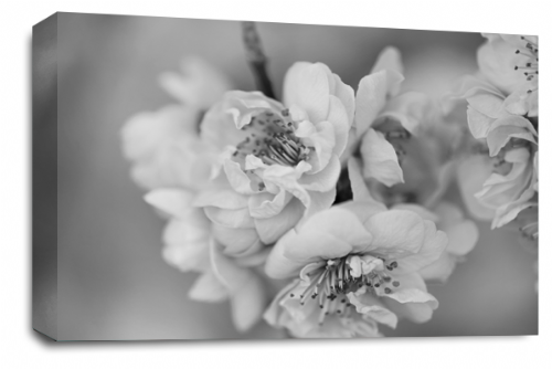 Floral Flower Wall Art Picture Grey White Spring Blossom Print